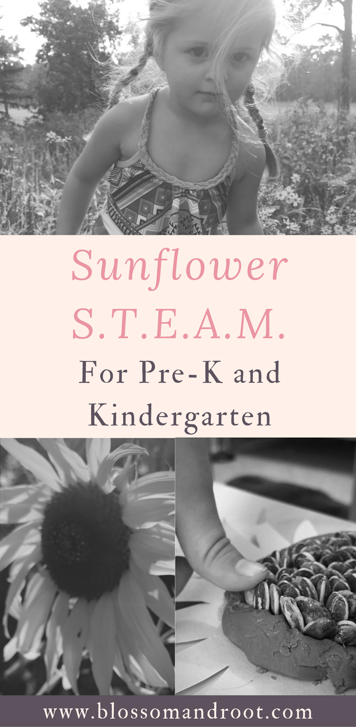 STEAM, nature study, and more in this mini-curriculum, inspired by sunflowers, for ages 3 to 8. Homeschool, homeschool resources, free download, Charlotte Mason, Book Seeds by Blossom and Root