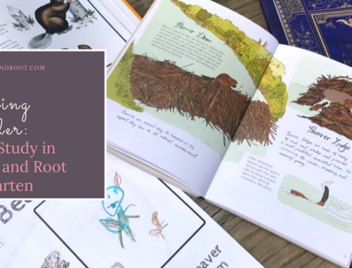 nature study kindergarten homeschool