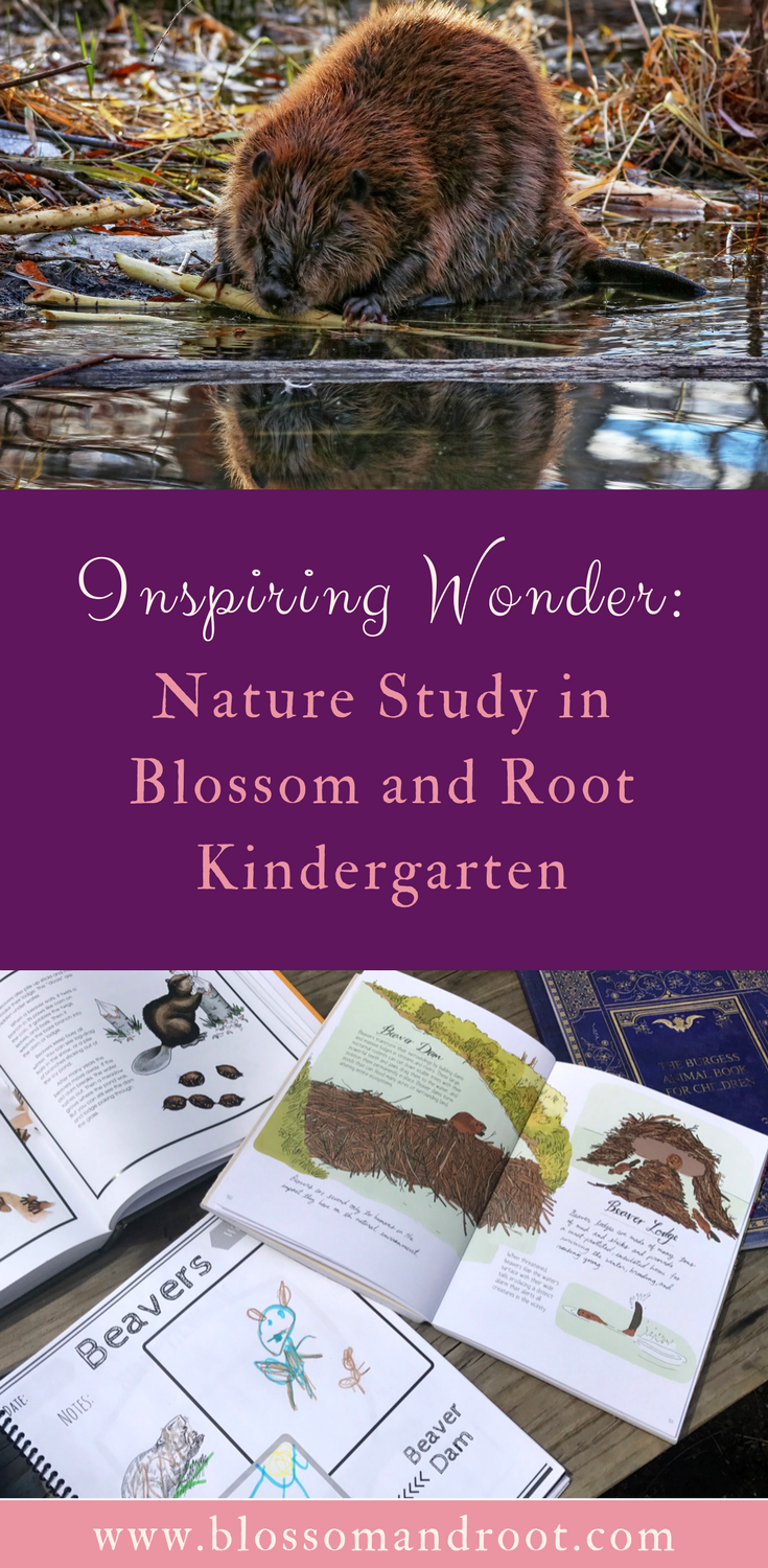 Using nature lore to inspire nature study, play, and discovery in a Charlotte Mason-inspired homeschool. Includes a peek at Blossom and Root Kindergarten's nature study curriculum.