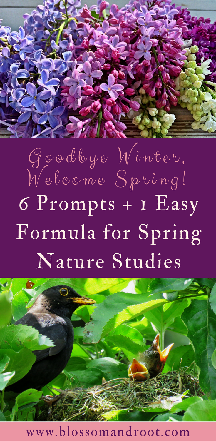 Six easy topics to explore during springtime nature studies, plus one simple formula to follow for optimal discovery with minimal stress. Use beautiful children's books to inspire wonder in the great outdoors, then refer to field guides to dig deeper. When you're ready, document discovery in your nature journal.
