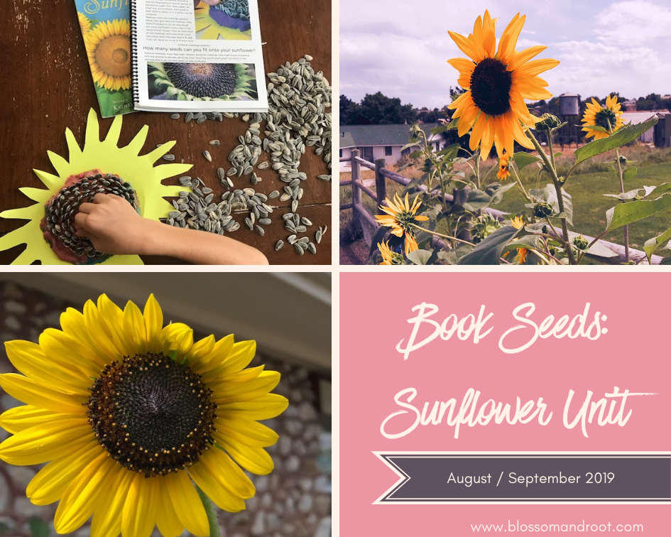 sunflower unit study homeschool