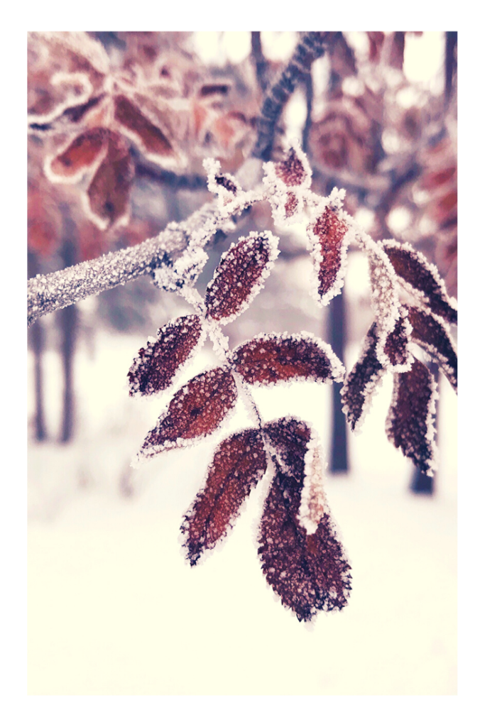 nature based homeschooling winter